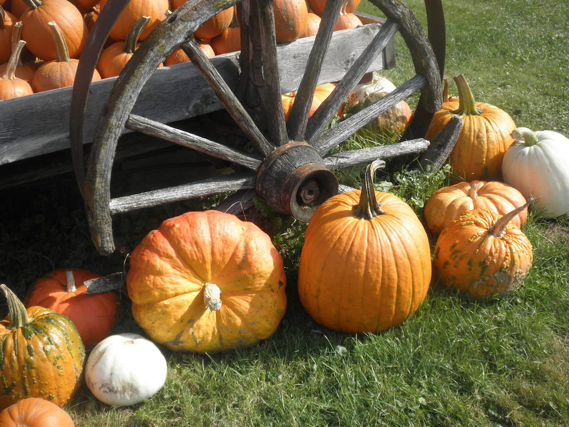Vermont Fall Pumpkins